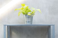 Pothos in zinc bucket but on zinc shelf. Loft style zinc pot and shelf planting with vine or pothos plant.  idea for little garden with small space house Stock Photos