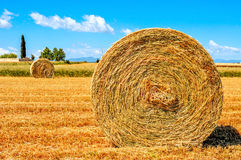 Poti il campo in Spagna con le balle rotonde della paglia dopo la raccolta Fotografie Stock Libere da Diritti