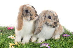 Poti il coniglio Fotografia Stock