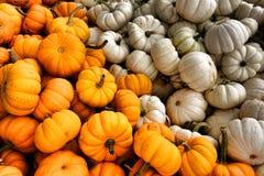 Potiron à vendre l'affichage pour Halloween et automne Photos stock