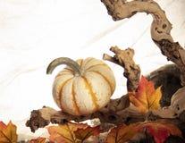 potiron blanc sur un bois et une décoration de feuilles photos libres de droits