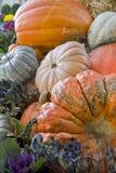 Potiron coloré d'automne Image stock