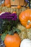 Potiron coloré d'automne Photographie stock libre de droits