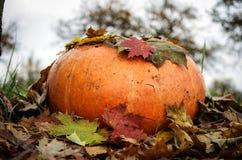 Potiron d'automne Photographie stock libre de droits
