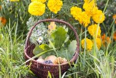 Potiron d'orange de panier de brun d'été de fruit photo libre de droits