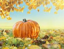 Potiron dans l'herbe avec le feuillage d'automne Photo libre de droits
