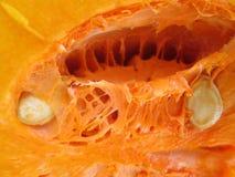 Potiron de Butternut Image stock