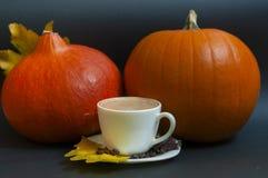 Potiron de café d'automne Photos stock