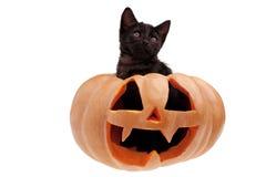 Potiron de Halloween et chat noir d'isolement photos libres de droits