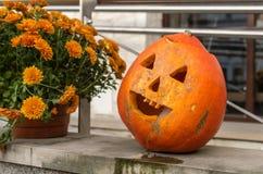 Potiron de Halloween se tenant sur le mur en pierre à côté des fleurs oranges Photo libre de droits