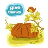 Potiron de thanksgiving Photographie stock libre de droits