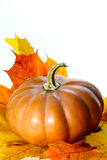 Potiron de thanksgiving avec des feuilles d'automne Photographie stock libre de droits