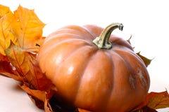 Potiron de thanksgiving sur des feuilles d'automne Images libres de droits