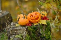 Potiron effrayant de Veille de la toussaint dans la forêt d'automne Images libres de droits