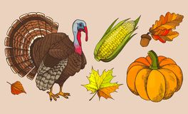 Potiron et Autumn Leaves Isolated Icons Vector illustration de vecteur