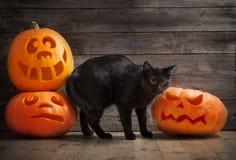 Potiron et chat de Halloween sur le fond en bois Image stock
