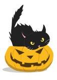 Potiron et chat de Veille de la toussaint Photographie stock libre de droits