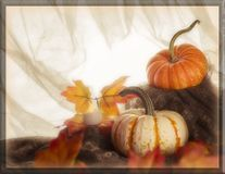 Potiron et feuilles oranges et blancs photos stock