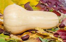 Potiron jaune de tarte sur les feuilles d'automne colorées avec des châtaignes et des glands Photographie stock