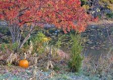 Potiron le long de côté d'un étang en automne Photos stock