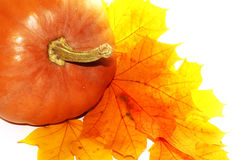 Potiron orange de thanksgiving sur des feuilles d'automne Photographie stock libre de droits