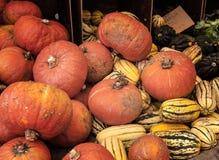 Potiron orange et jaune Image libre de droits