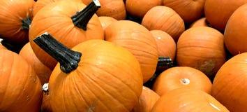 POTIRON, orange, récolte d'automne, thanksgiving, petite taille, décoration de table photos libres de droits