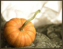 Potiron orange sur le tissu vert photo libre de droits