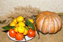 Potiron, plat avec le kaki et mandarines en gros plan Photographie stock