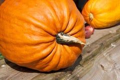 Potiron sur l'étagère Halloween photo libre de droits