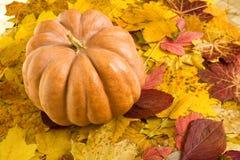 Potiron sur le fond de feuilles d'automne Images libres de droits
