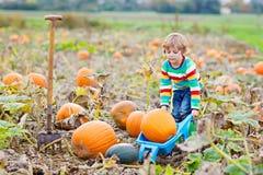 Potirons adorables de cueillette de garçon de petit enfant sur la correction de potiron de Halloween Photographie stock libre de droits