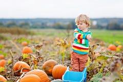 Potirons adorables de cueillette de garçon de petit enfant sur la correction de potiron de Halloween Images libres de droits