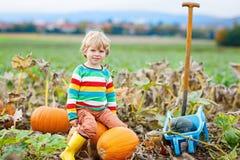 Potirons adorables de cueillette de garçon de petit enfant sur la correction de potiron de Halloween Photo libre de droits