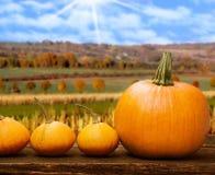 Potirons avant paysage d'automne Images stock