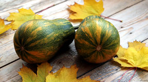 Potirons avec des feuilles d'érable Photos stock
