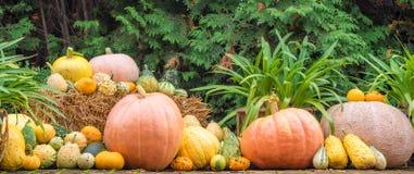 Potirons comme décoration pour l'automne et le Halloween images libres de droits