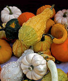 Potirons courge et courges Photographie stock