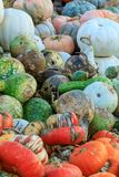Potirons, courges, et courge assortis Image stock