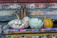 Potirons décoratifs photographie stock libre de droits