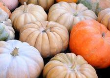 Potirons d'automne Photos libres de droits