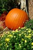 Potirons d'automne photo libre de droits