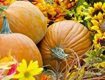 Potirons d'automne Images libres de droits