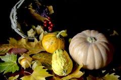 Potirons d'automne et feuilles sèches Image stock