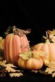 Potirons d'automne - verticale Photo stock