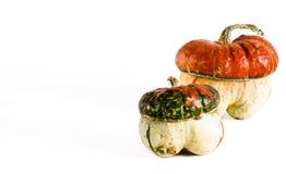 potirons d?coratifs sous forme de champignon Sur un fond blanc photos libres de droits