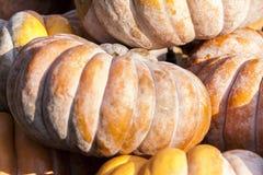 Potirons de potiron de cucurbita de Muscade De Provence d'automne Image libre de droits