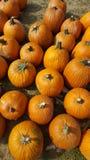 Potirons de potirons un plaisir d'automne Images stock