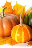 Potirons de thanksgiving avec des feuilles d'automne Photos libres de droits