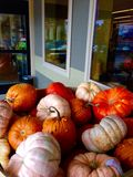 Potirons en abondance chez Halloween Photographie stock